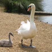 Esercizio #4 per essere genitori consapevoli